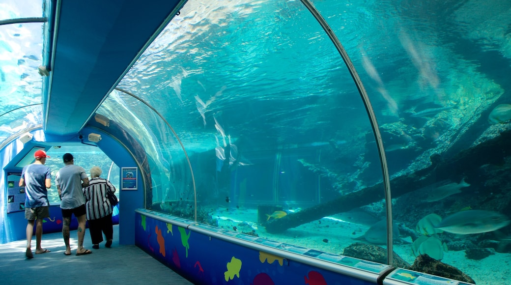 ReefHQ Aquarium showing interior views and marine life as well as a small group of people
