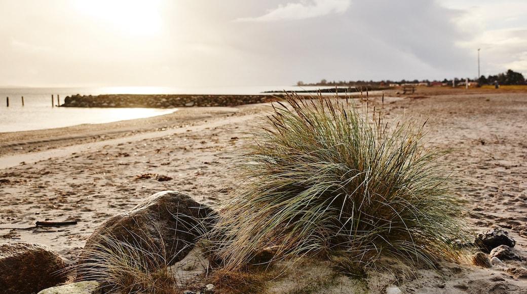 Juelsminde showing general coastal views and a beach
