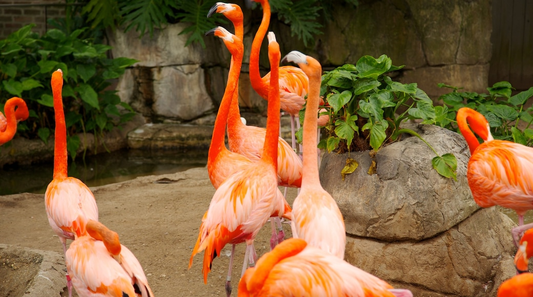 Audubon Zoo which includes bird life and zoo animals