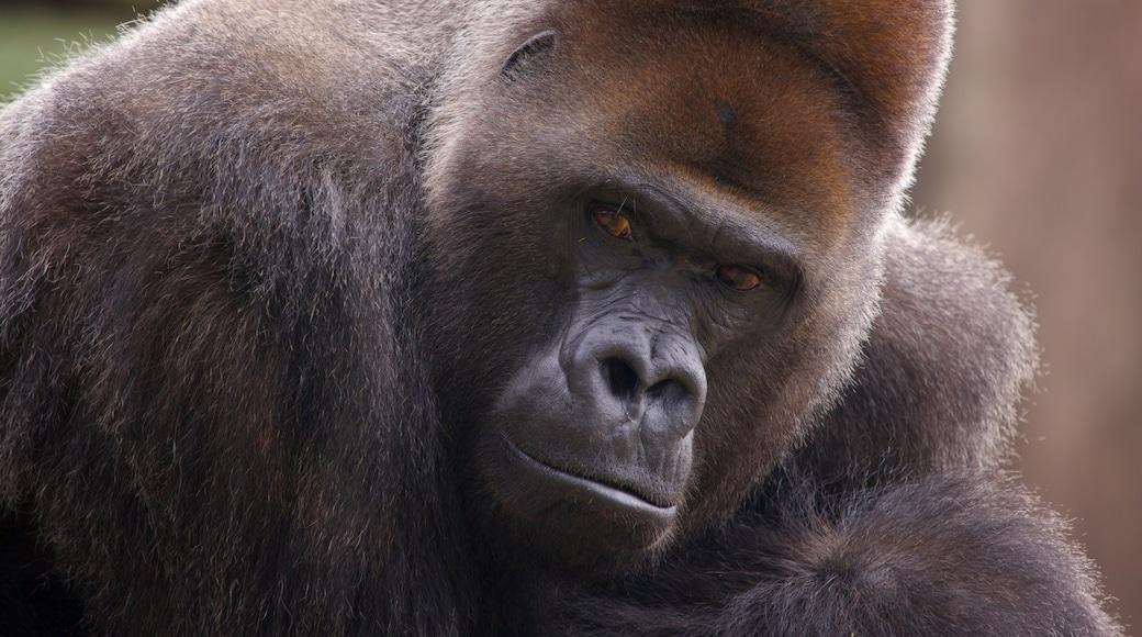Audubon Zoo featuring land animals and zoo animals