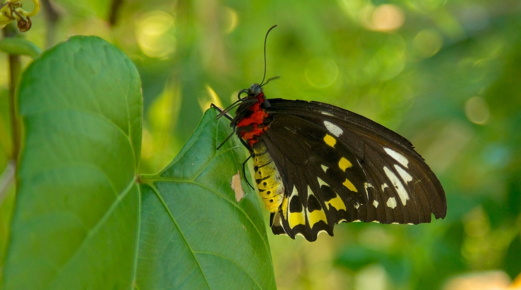 Butterfly World som viser dyr