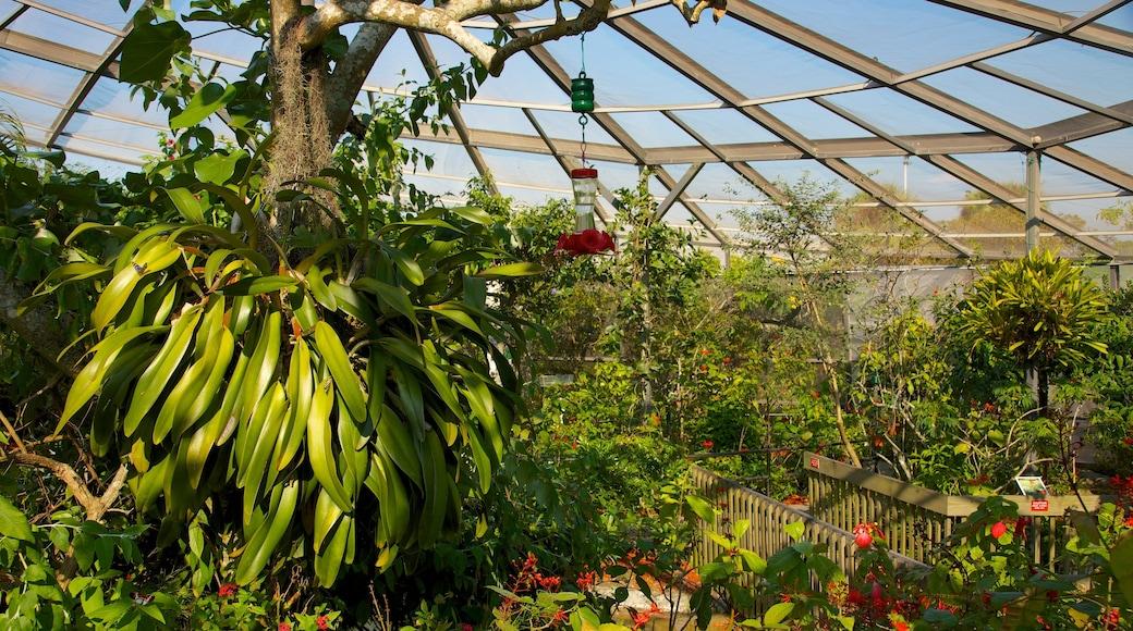 Butterfly World som viser innendørs og park
