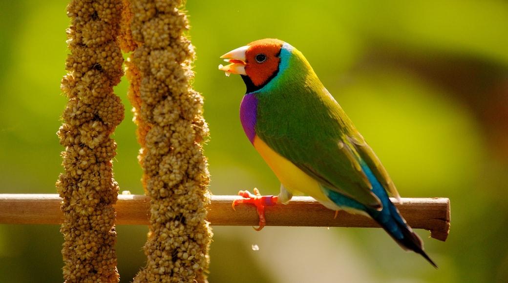 Butterfly World som viser fugleliv og dyrehagedyr