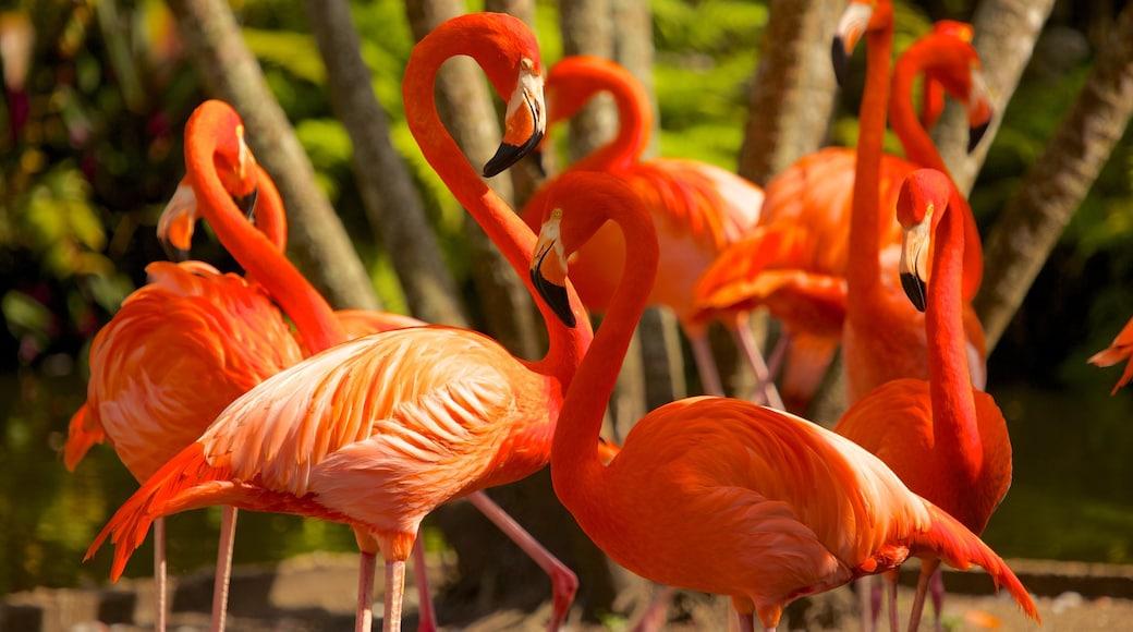 Flamingo Gardens showing bird life and zoo animals