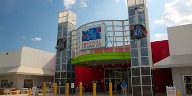 Festival Flea Market que incluye compras y mercados