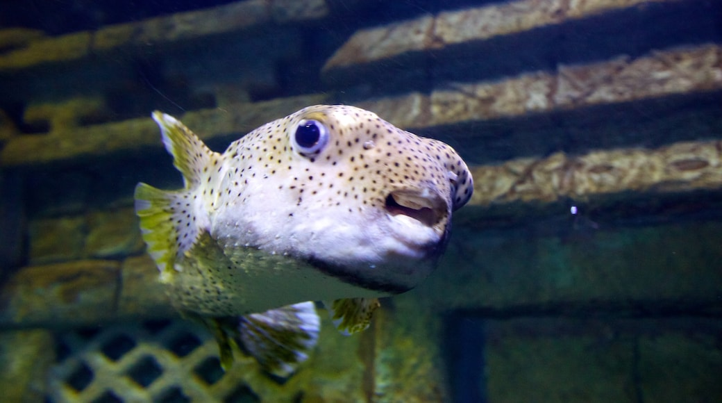 Downtown Aquarium showing marine life