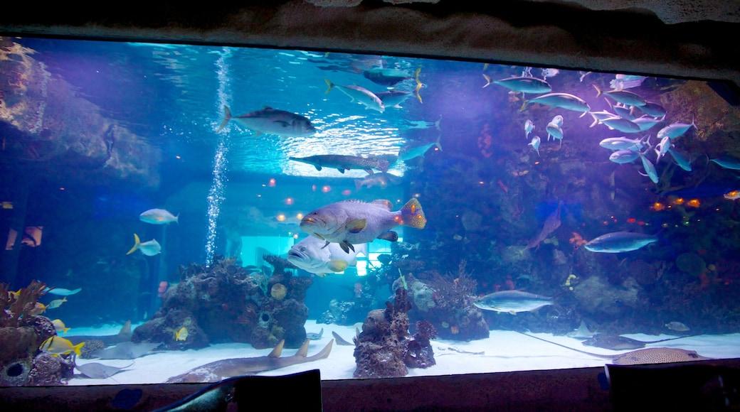 Downtown Aquarium caracterizando vida marinha e vistas internas
