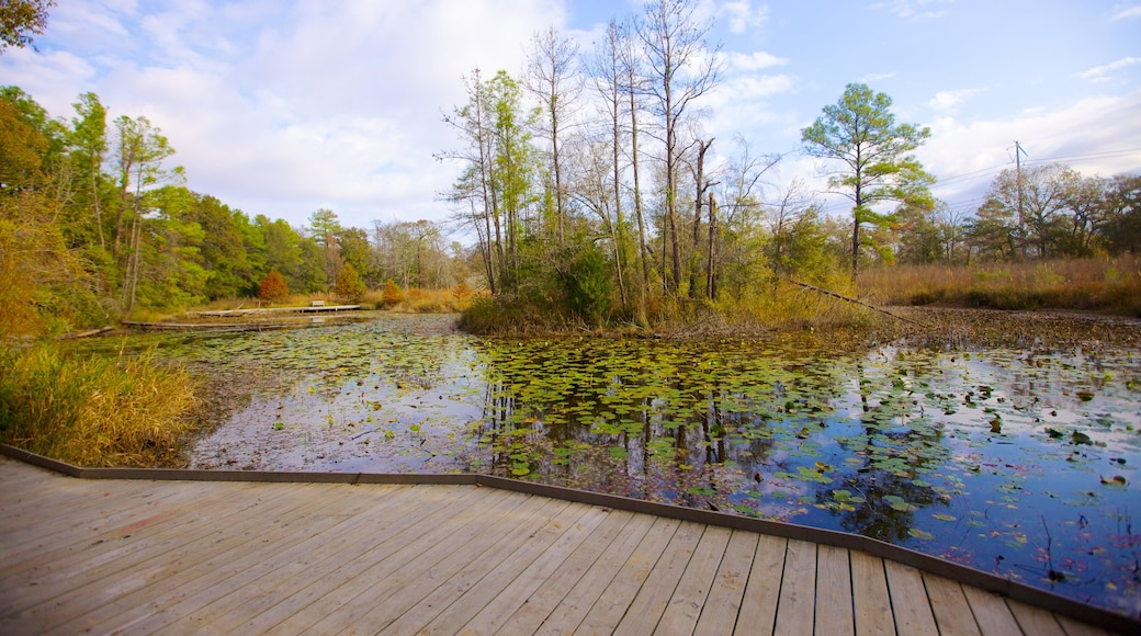 Houston Arboretum and Nature Center showing a garden, landscape views and a pond