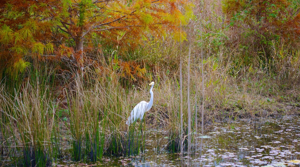 Houston Arboretum and Nature Center showing wetlands, forests and bird life