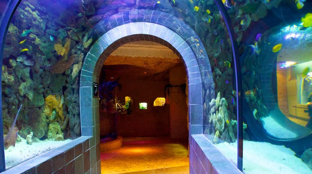Dallas World Aquarium featuring marine life and interior views