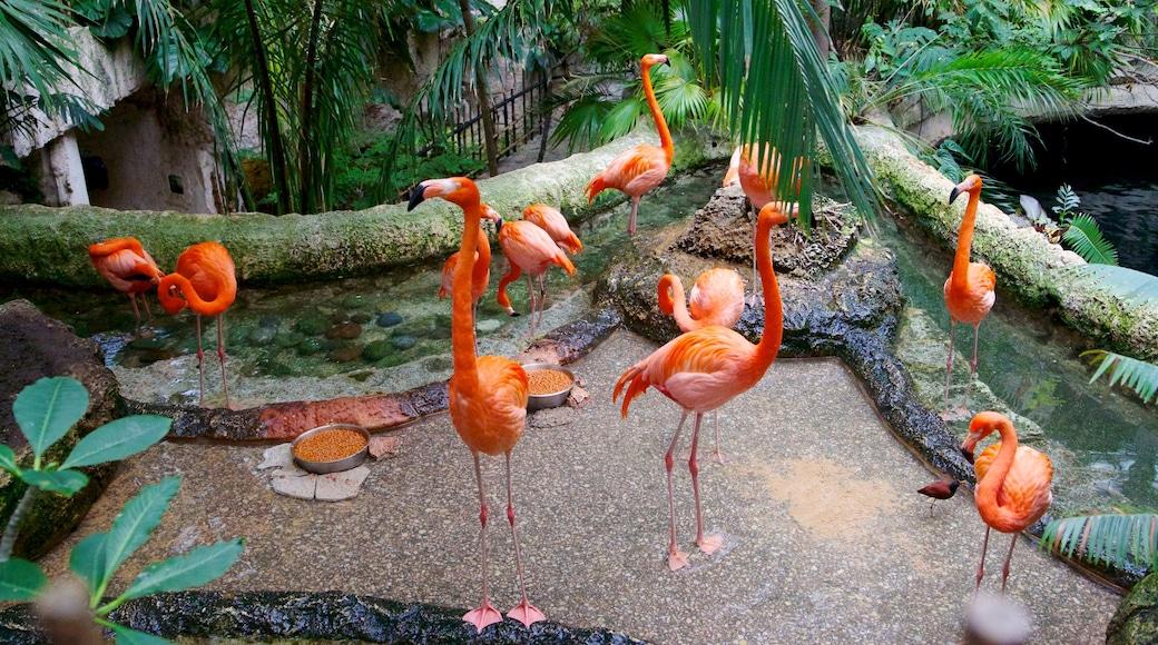 Dallas World Aquarium which includes marine life, zoo animals and bird life