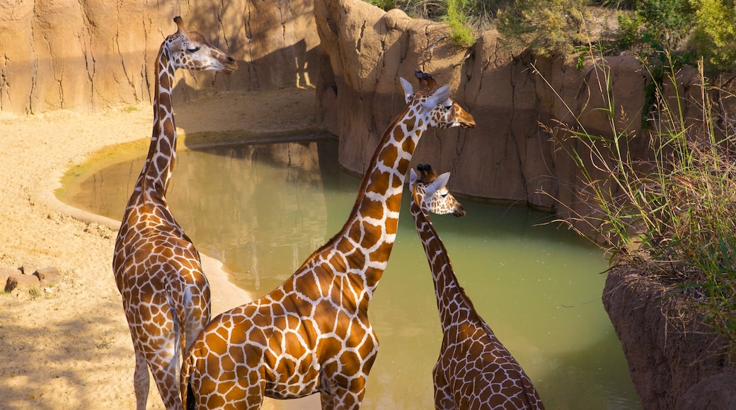 Dallas Zoo which includes land animals and zoo animals