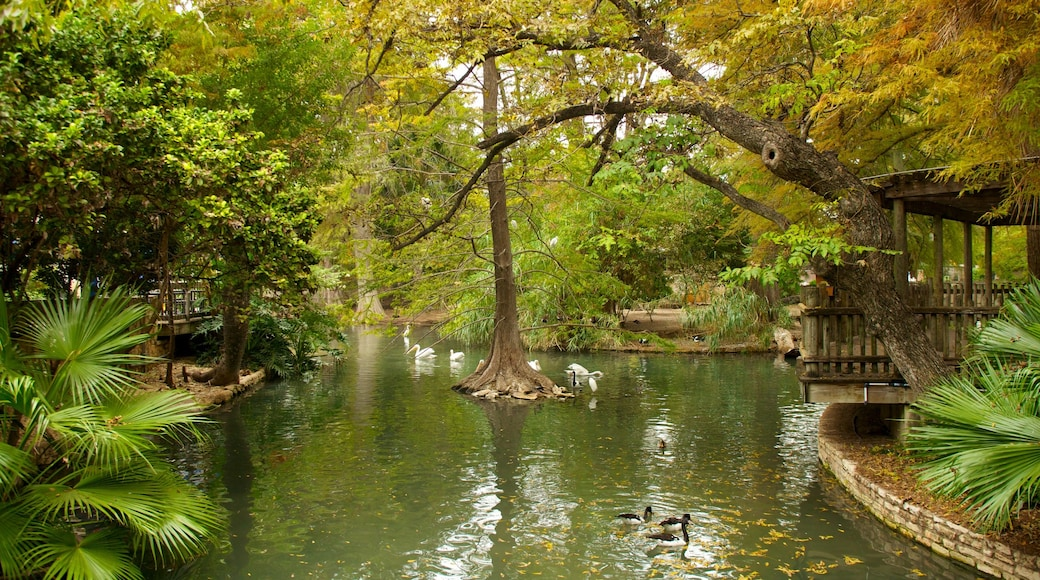 San Antonio Zoo and Aquarium which includes forests, mangroves and zoo animals