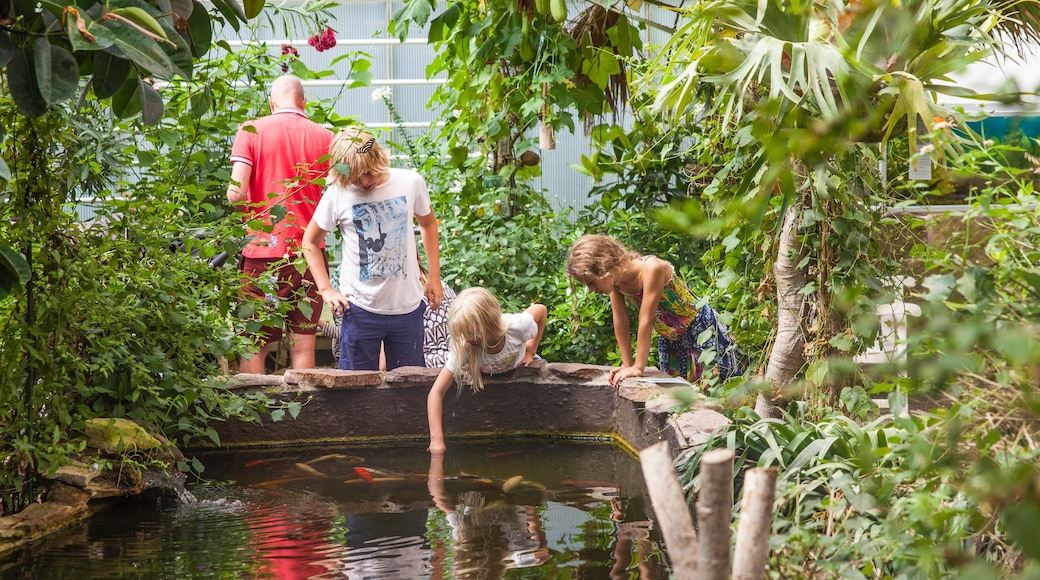 Nexo mit einem Teich und Garten sowie Kinder