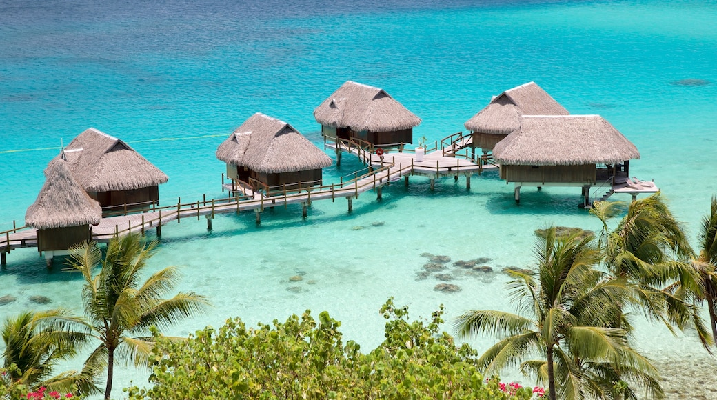 Society Islands featuring tropical scenes and general coastal views