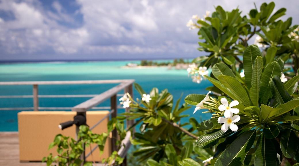 Sofitel Motu welches beinhaltet allgemeine Küstenansicht, Wildblumen und tropische Szenerien