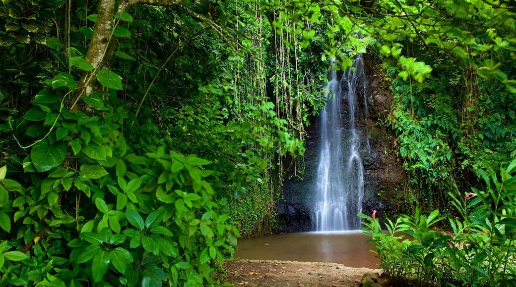 The Water Gardens of Vaipahi welches beinhaltet Wasserfall, Fluss oder Bach und Wälder