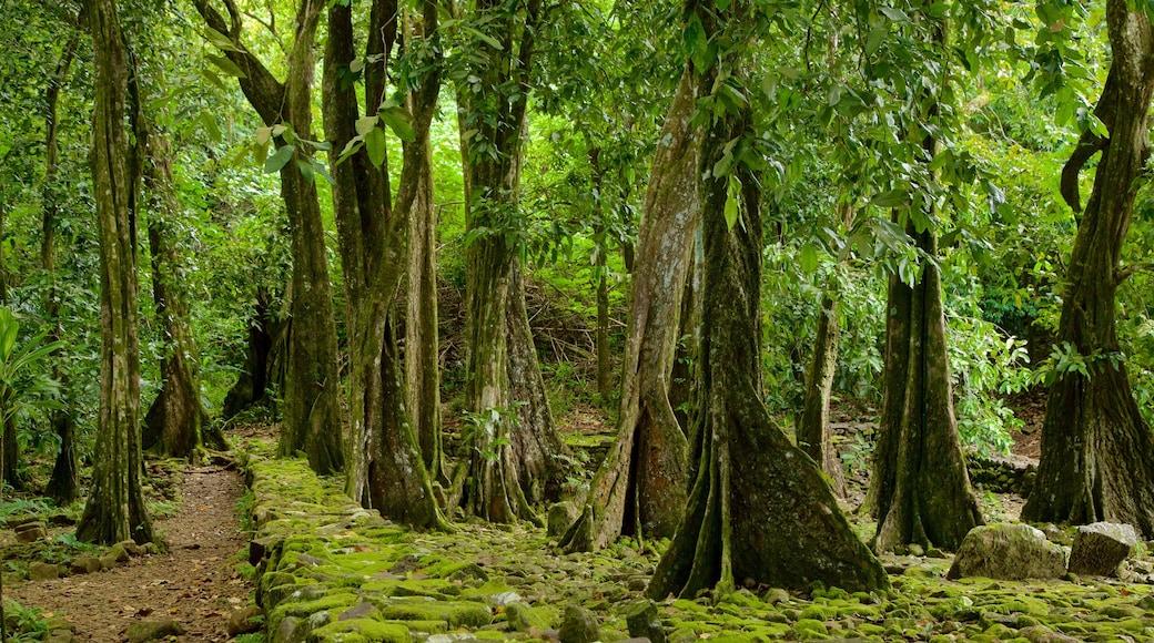 Moorea qui includes scènes forestières