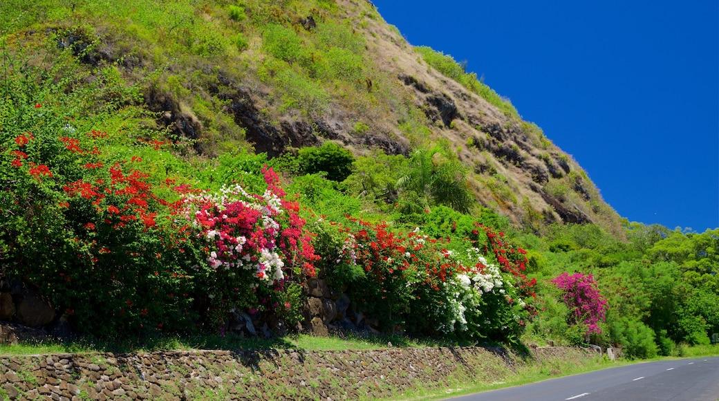 Moorea montrant scènes tranquilles et fleurs sauvages