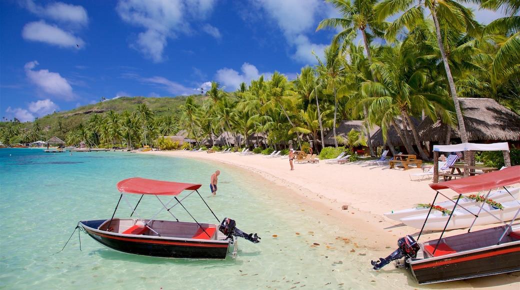 Sofitel Resorts strand som visar kustutsikter, tropisk natur och en strand