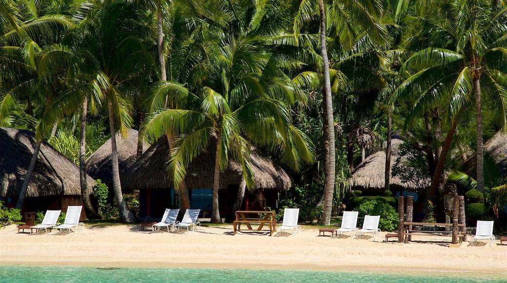 Strand des Sofitel Resort welches beinhaltet Strand, tropische Szenerien und allgemeine Küstenansicht