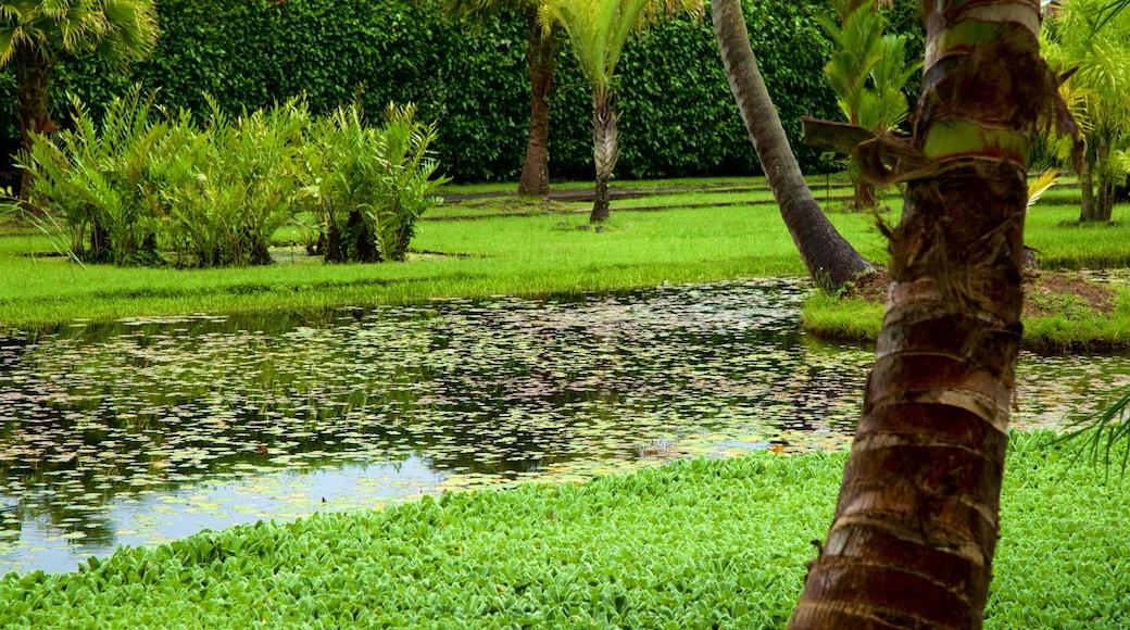 The Water Gardens of Vaipahi das einen Park und Teich