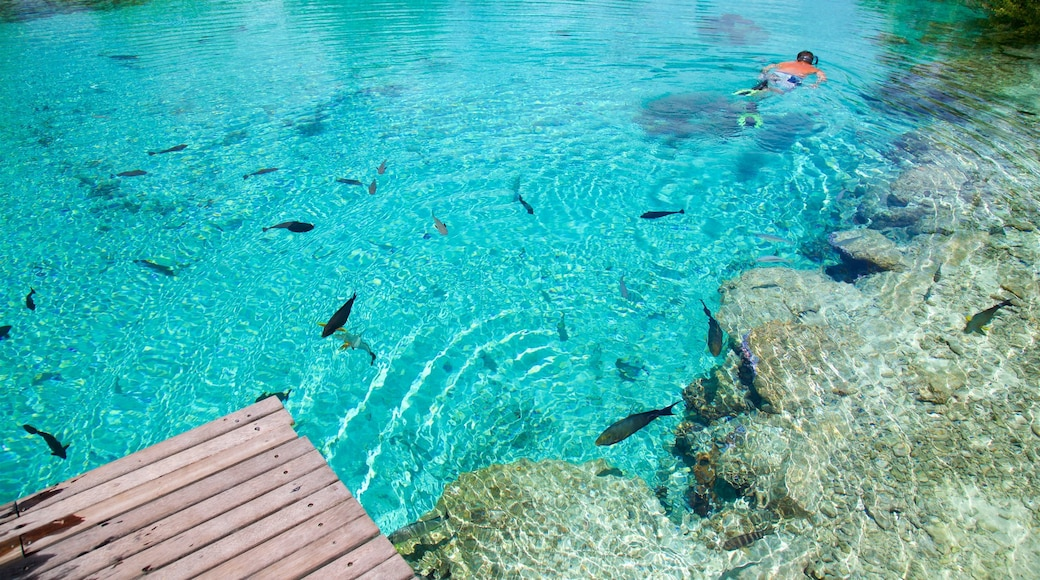 Bora Bora Lagoonarium featuring snorkelling and marine life as well as an individual male