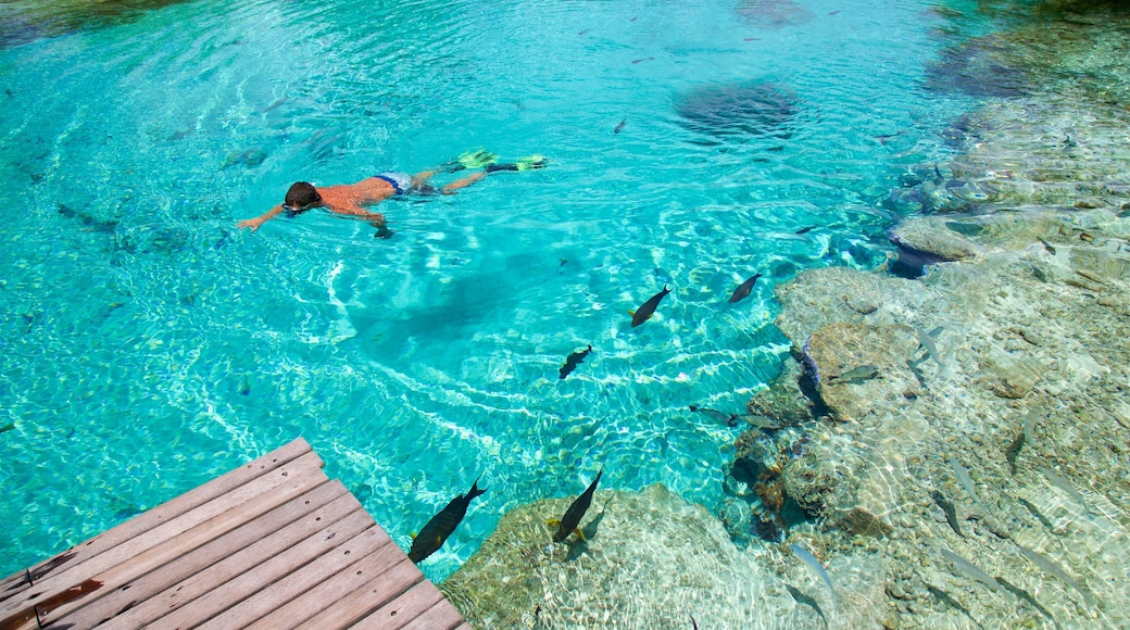 Bora Bora Lagoonarium which includes marine life and snorkelling as well as an individual male