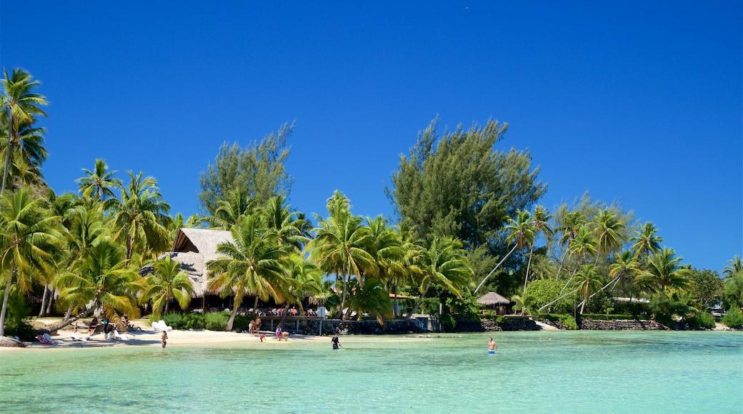 Tiahura Beach which includes tropical scenes and general coastal views