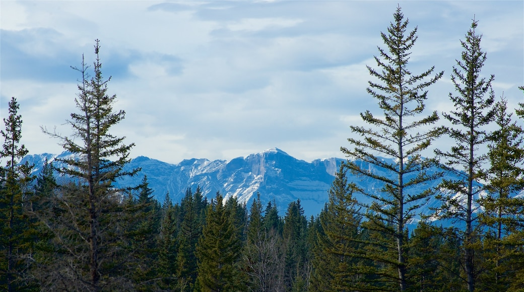 Hinton which includes mountains