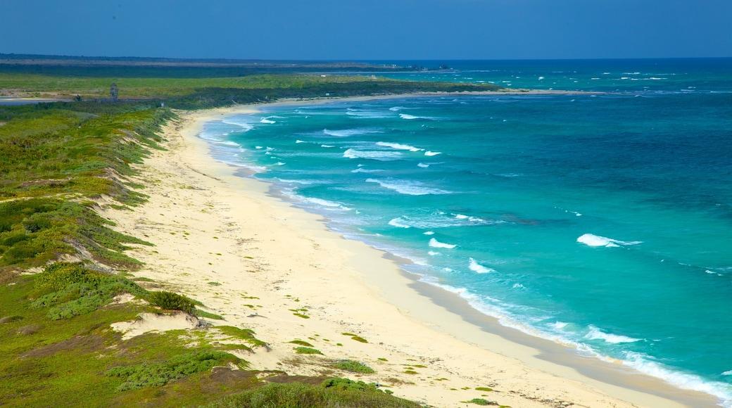 Punta Celerain Lighthouse featuring general coastal views, a sandy beach and waves