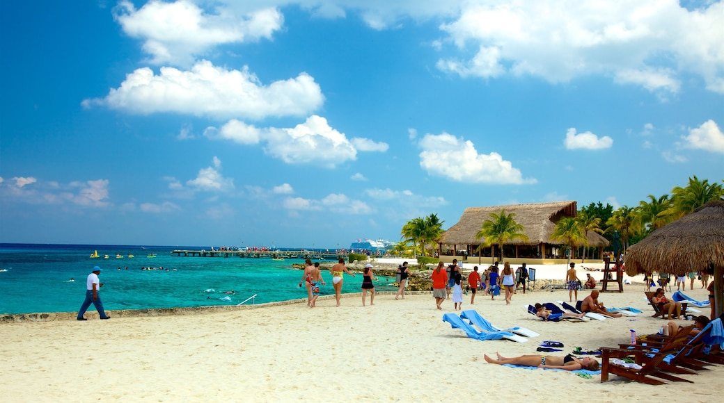 Cozumel which includes tropical scenes, a beach and general coastal views