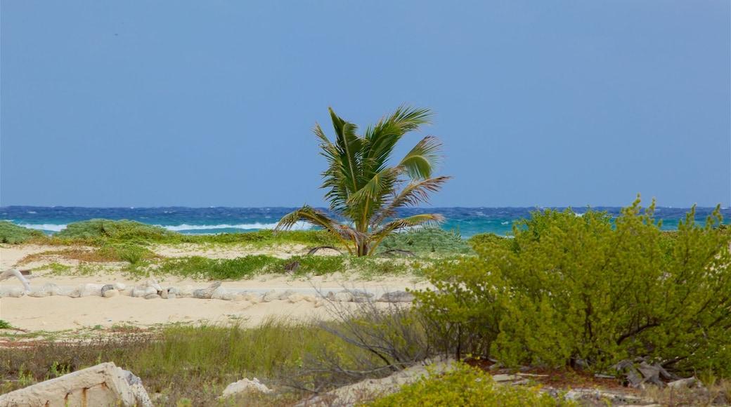 Punta Celerain Lighthouse showing a sandy beach and general coastal views