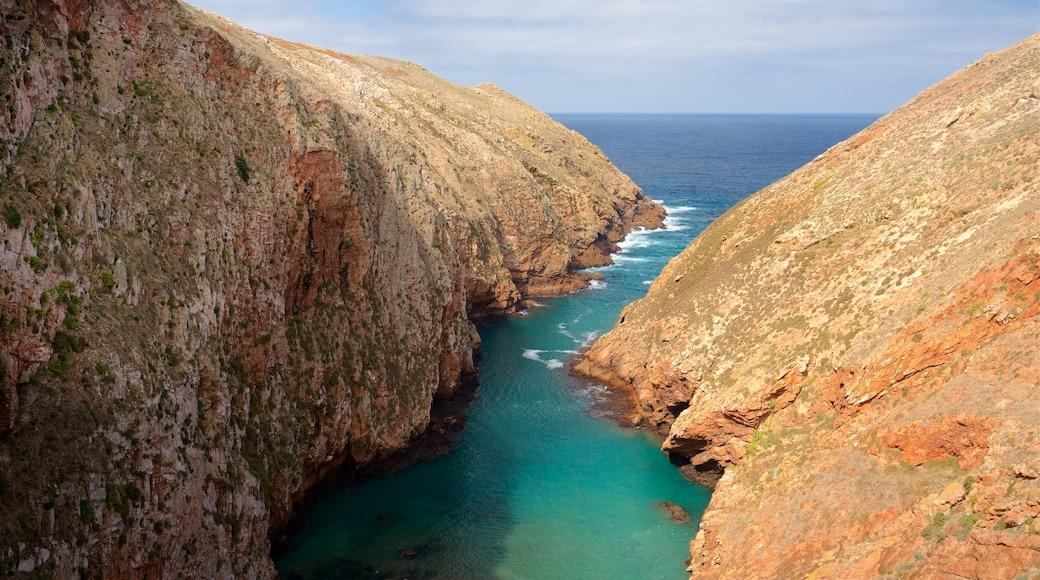 Berlenga Island mostrando vista della costa e costa rocciosa