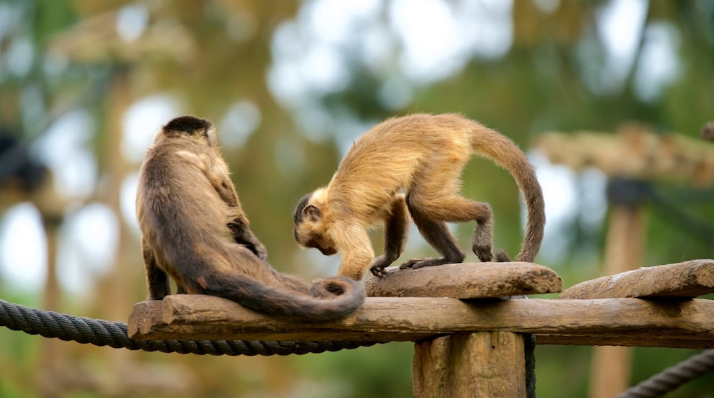 Lagos Zoo which includes zoo animals and cuddly or friendly animals