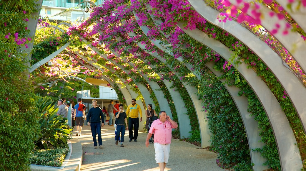 Southbank Parklands showing wild flowers and a garden as well as a small group of people