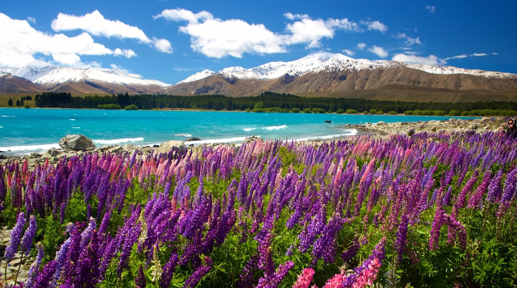 Lake Tekapo featuring mountains, a lake or waterhole and wild flowers