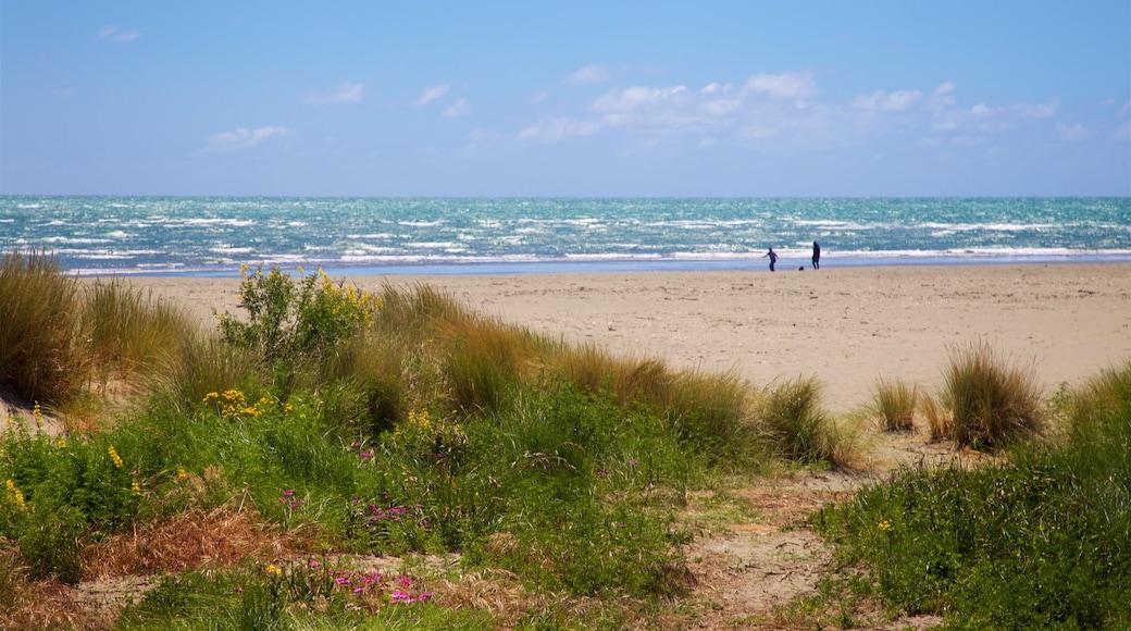 Sumner Beach showing general coastal views and a beach