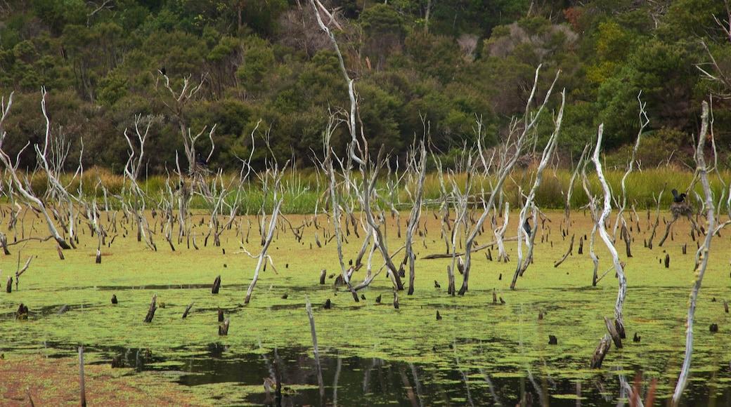 Kai Iwi Lakes featuring wetlands