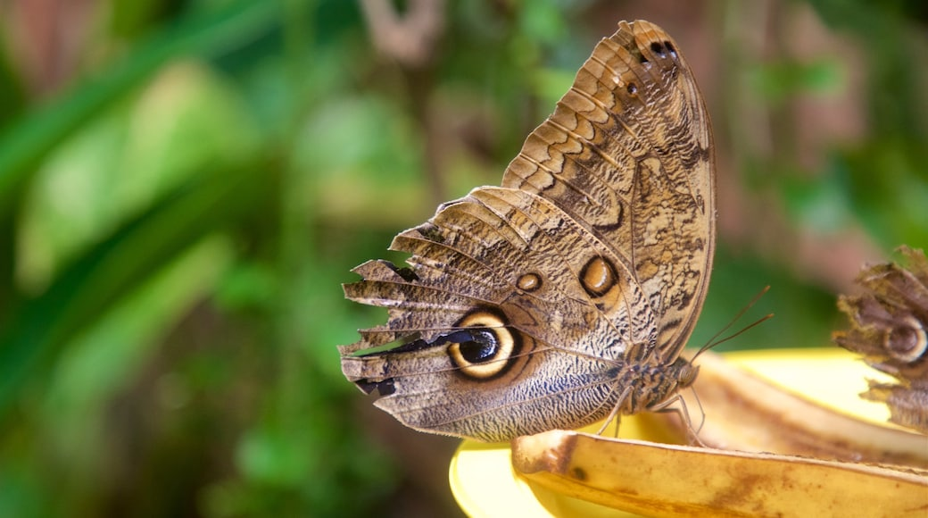Butterfly and Orchid Garden which includes animals