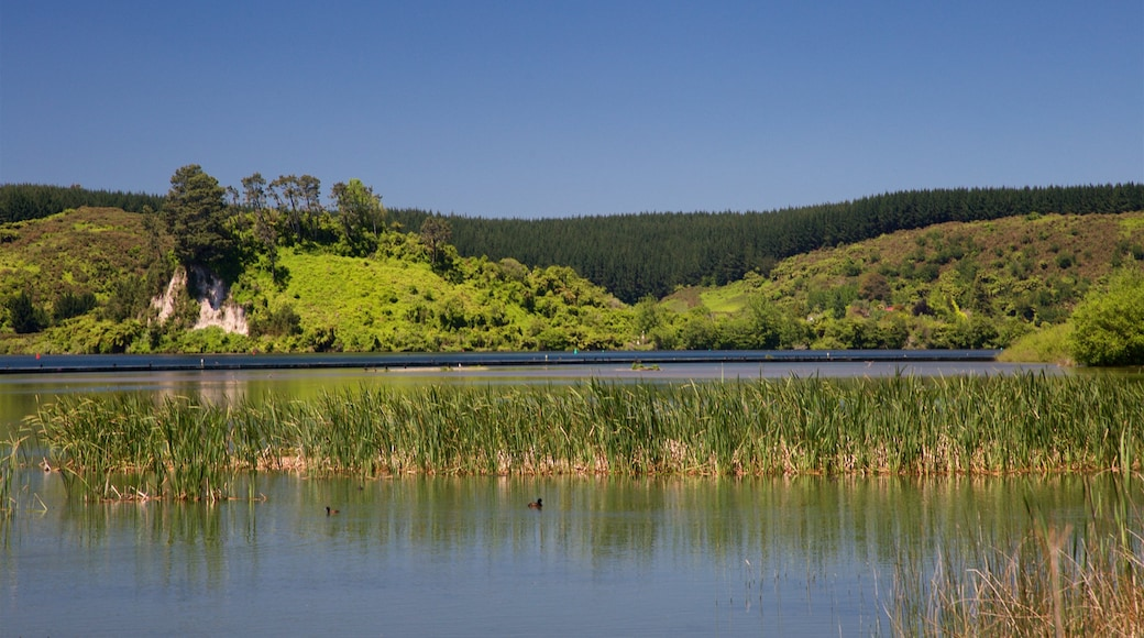 Lake Rotoiti showing a lake or waterhole and tranquil scenes