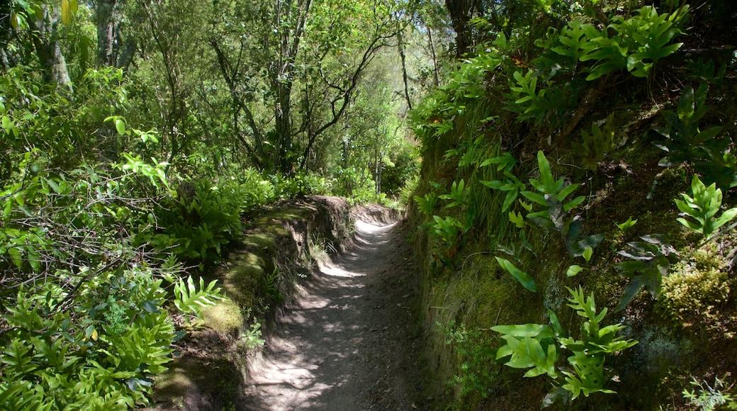 Aratiatia Rapids featuring forest scenes