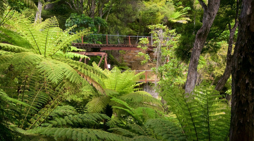 Driving Creek Railway featuring forests