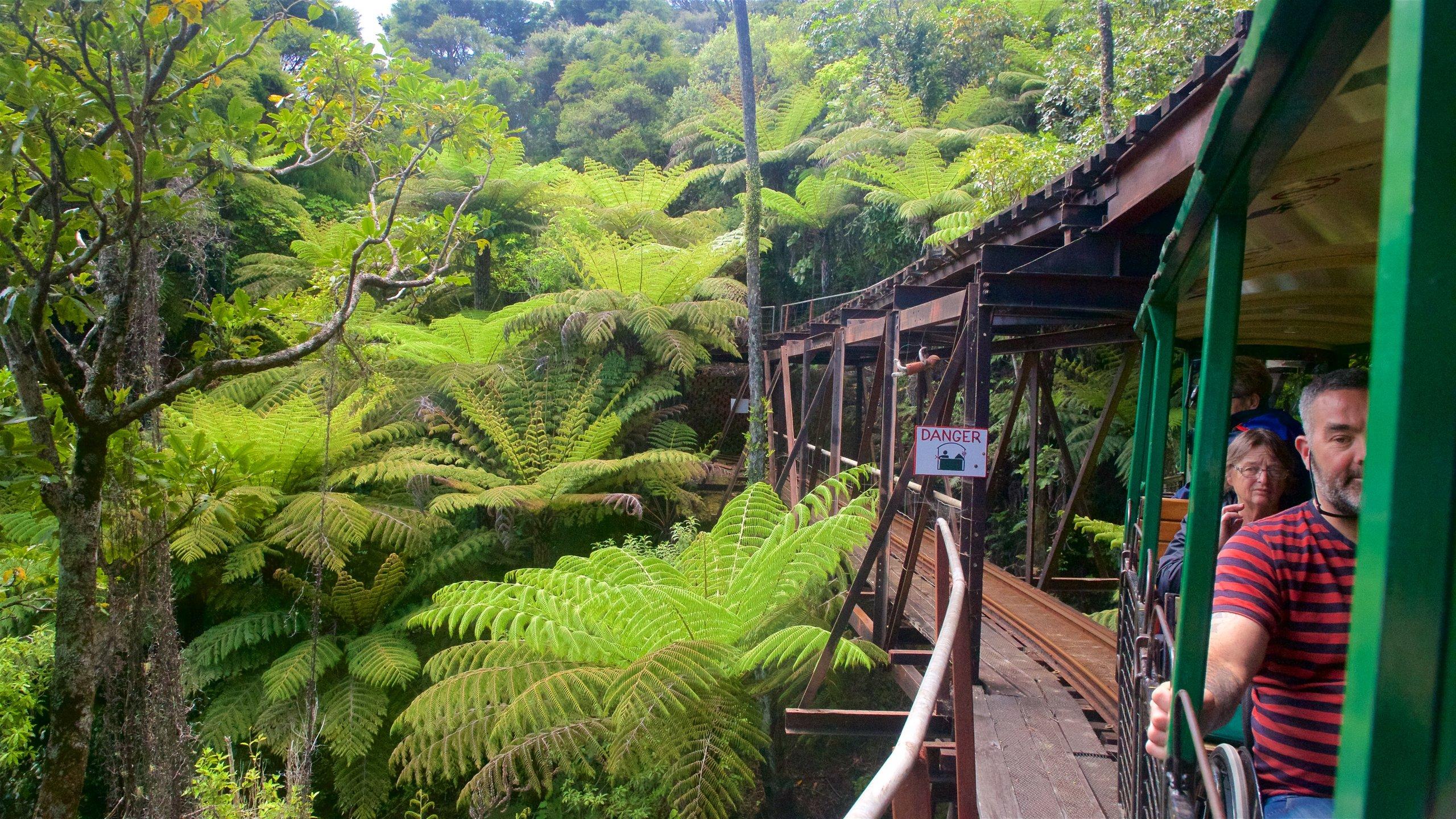 Driving Creek Railway, Coromandel, Waikato, New Zealand