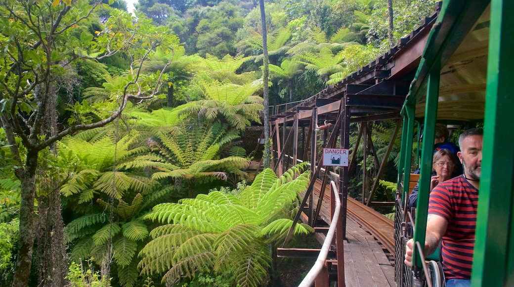 Driving Creek Railway featuring forests and railway items as well as a small group of people