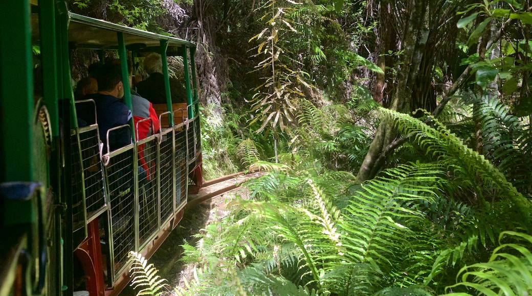 Driving Creek Railway which includes railway items and forests as well as a small group of people