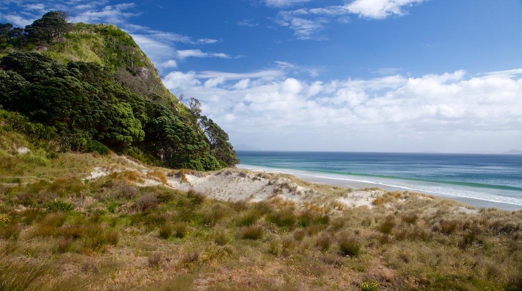 Mangawhai Heads Beach which includes a beach and general coastal views