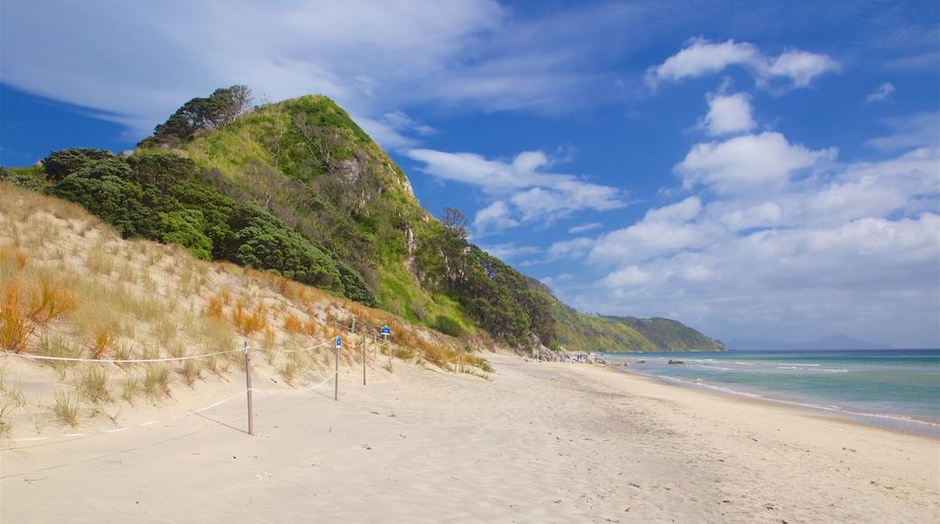 Mangawhai Heads Beach featuring general coastal views and a beach