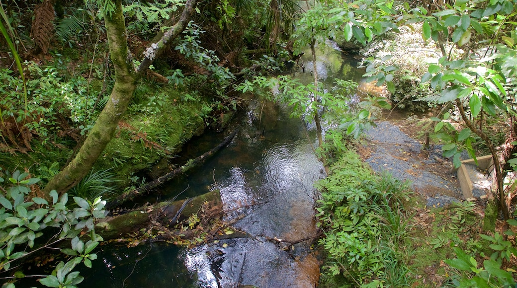 Tane Mahuta showing a river or creek and forests