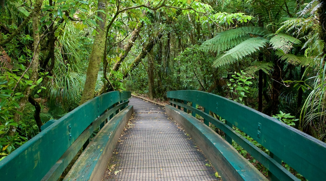 Tane Mahuta showing forest scenes and a bridge